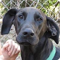 Adopt A Pet :: Justice! - St Petersburg, FL