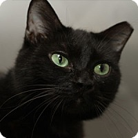 Adopt A Pet :: Shadow - Wakinsville, GA