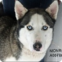 Adopt A Pet :: Monroe - Sugar Land, TX