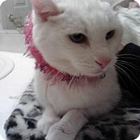 Adopt A Pet :: Ki Ki - Sterling Hgts, MI