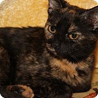 Adopt A Pet :: Burrito (Spayed) - Marietta, OH