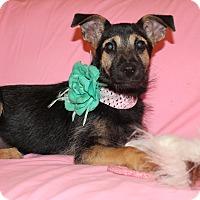 Adopt A Pet :: Ariel - Trenton, NJ