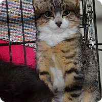 Adopt A Pet :: Navaho - Kelso/Longview, WA