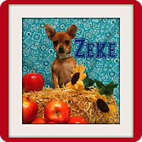 Adopt A Pet :: Zeke - Tracy, CA
