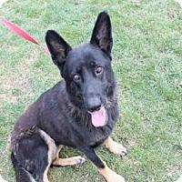 Adopt A Pet :: BULLET - Decatur, IL