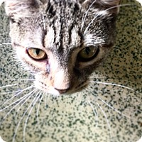 Adopt A Pet :: Captain Janeway - Indianapolis, IN