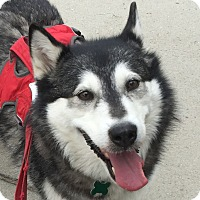 Adopt A Pet :: ABBY - Needs Foster Home! - Boise, ID