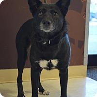 Adopt A Pet :: Molly - Cokato, MN