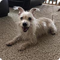 Adopt A Pet :: Bride - Princeton, MN