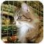 Photo 2 - Domestic Longhair Cat for adoption in Proctor, Minnesota - Benjamin