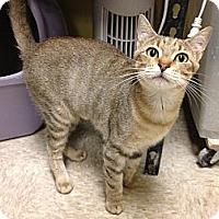 Adopt A Pet :: Simone - Fort Lauderdale, FL