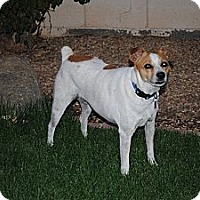 Adopt A Pet :: Ruby Tuesday - Phoenix, AZ