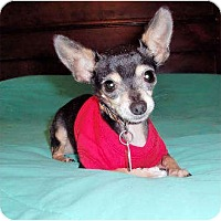 Adopt A Pet :: Kojak - Mooy, AL