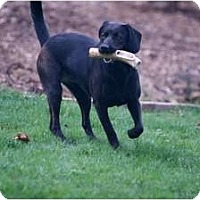 Adopt A Pet :: Betsy Bell - Cumming, GA