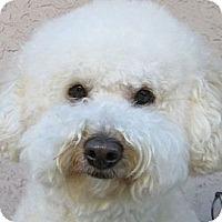 Adopt A Pet :: Gatsby - La Costa, CA