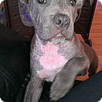 Adopt A Pet :: Casanova - San Diego, CA