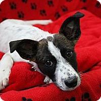 Adopt A Pet :: Oreo - san diego, CA