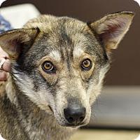 Adopt A Pet :: Sweety - Ile-Perrot, QC