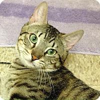 Adopt A Pet :: Yogi - Foothill Ranch, CA