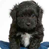 Adopt A Pet :: Darcy - Nuevo, CA