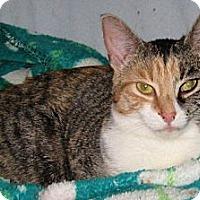 Adopt A Pet :: Gimble - Alexandria, VA
