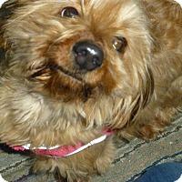 Adopt A Pet :: Tiny - Wyanet, IL