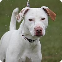 Adopt A Pet :: DiDi - $75! - Midland, MI
