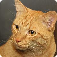 Adopt A Pet :: C.J. (Neutered) - Marietta, OH
