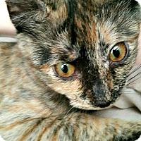 Adopt A Pet :: Harley Quinn - Chesapeake, VA