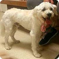 Adopt A Pet :: Buddy-ADOPTION PENDING - Boulder, CO