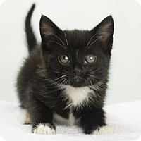 Adopt A Pet :: Riley - Oxford, MS