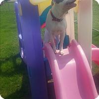 Adopt A Pet :: POLO - New Windsor, NY