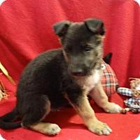 Adopt A Pet :: Dylan - Vacaville, CA