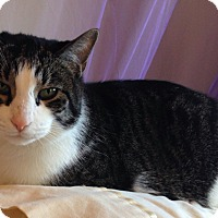 Adopt A Pet :: Charlie - Milwaukee, WI
