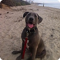 Adopt A Pet :: Diesel, The Beautiful - Orange, CA