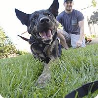 Adopt A Pet :: Marvin Gaye - Jersey City, NJ