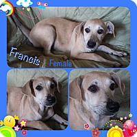 Adopt A Pet :: Frances in CT - Manchester, CT