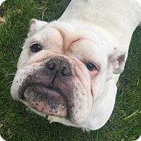 Adopt A Pet :: Queenie - Barrington, IL