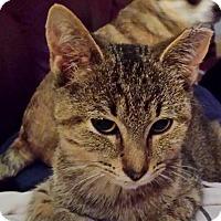 Adopt A Pet :: Fancy - Chelsea - Kalamazoo, MI