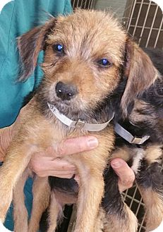 Terrier (Unknown Type, Medium) Mix Dog for adoption in West Palm Beach, Florida - Elsa