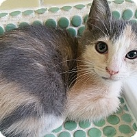 Adopt A Pet :: Felicity - Tampa, FL