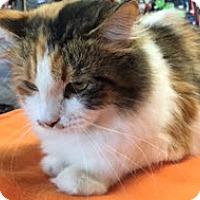 Adopt A Pet :: Freckles - McKinney, TX