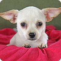 Adopt A Pet :: Diamond - Yuba City, CA