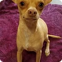Adopt A Pet :: Dina - Los Angeles, CA