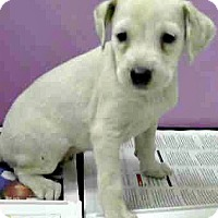 Adopt A Pet :: London-Adoption Pending - Boulder, CO