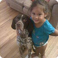 German Shorthaired Pointer Dog for adoption in Oak Ridge, New Jersey - Duke