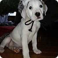 Adopt A Pet :: Christmas - Lake In The Hills, IL