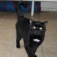 Adopt A Pet :: Cooper - Lacon, IL