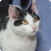 Adopt A Pet :: Roxanne - Elmwood Park, NJ