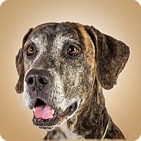 Adopt A Pet :: Happy-Go - Prescott, AZ